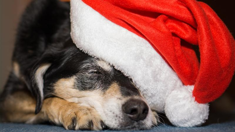 kerstlunch-met-animals-in-distress-1
