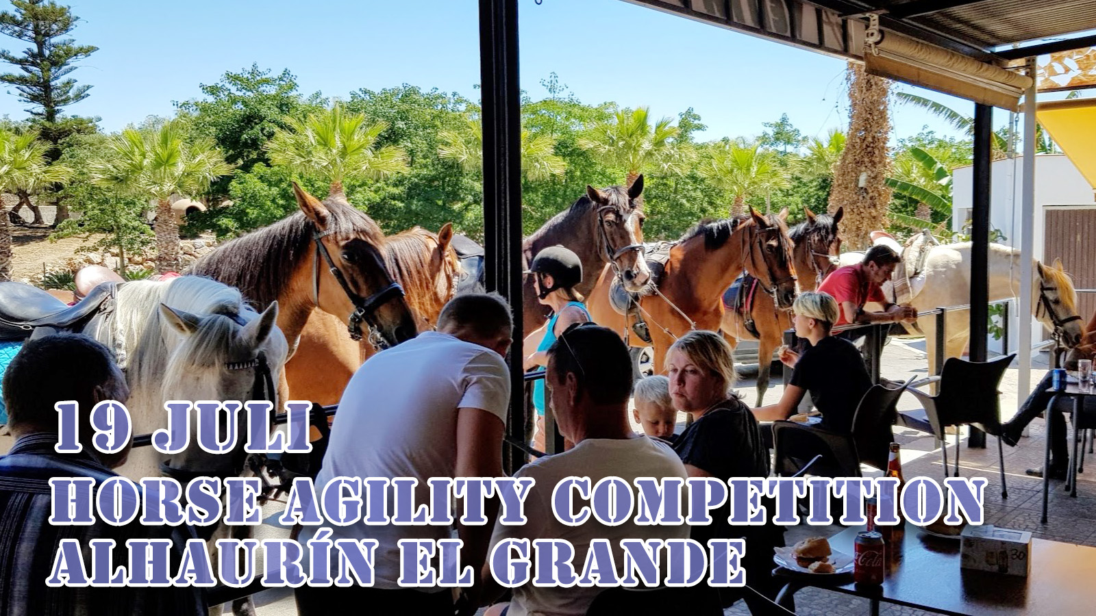 horse-agility-competition
